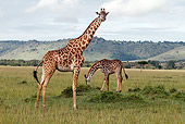 AFW 09 DB0011 01