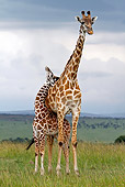 AFW 09 DB0013 01