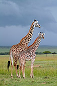 AFW 09 DB0014 01