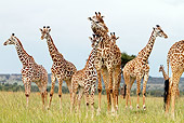 AFW 09 DB0019 01