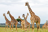AFW 09 DB0020 01