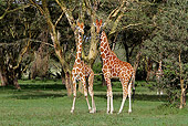AFW 09 DB0030 01