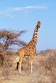 AFW 09 GL0002 01