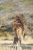 AFW 09 GL0003 01
