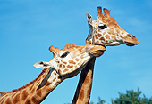 AFW 09 GL0006 01