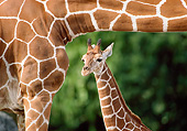 AFW 09 GR0004 01
