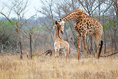 AFW 09 HP0005 01