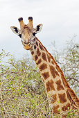 AFW 09 JM0004 01