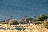 AFW 09 KH0002 01