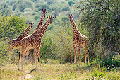 AFW 09 KH0003 01