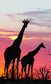 AFW 09 KH0016 01