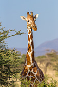 AFW 09 KH0019 01