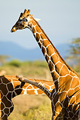 AFW 09 MC0005 01