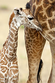 AFW 09 MC0012 01