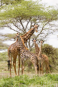 AFW 09 MC0013 01