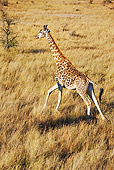 AFW 09 MH0015 01