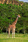 AFW 09 MH0018 01