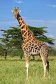 AFW 09 MH0019 01
