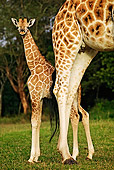 AFW 09 MH0022 01