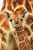 AFW 09 MH0024 01