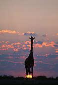 AFW 09 MH0039 01