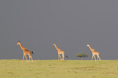 AFW 09 NE0018 01