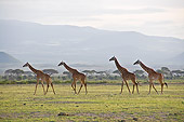 AFW 09 NE0020 01