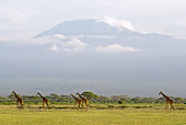 AFW 09 NE0022 01