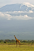 AFW 09 NE0023 01