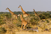 AFW 09 DB0003 01
