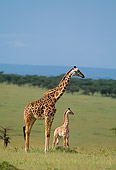 AFW 09 DB0004 01