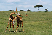 AFW 09 DB0005 01