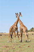 AFW 09 DB0007 01