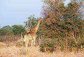 AFW 09 DS0001 01