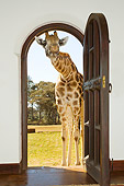 AFW 09 JZ0001 01