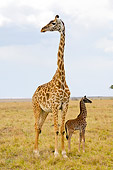 AFW 09 NE0002 01