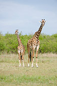 AFW 09 NE0005 01
