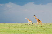 AFW 09 NE0006 01
