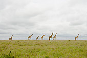 AFW 09 NE0009 01