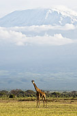AFW 09 NE0012 01