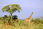 AFW 09 RF0002 01