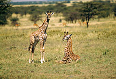AFW 09 RW0001 01