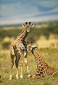 AFW 09 RW0002 01