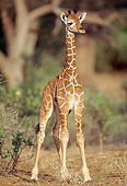 AFW 09 RW0004 01
