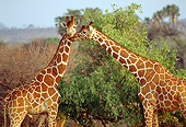 AFW 09 RW0005 01