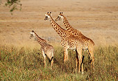 AFW 09 TL0005 01