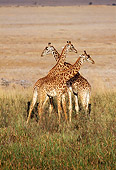 AFW 09 TL0007 01