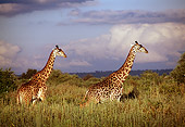 AFW 09 TL0009 01