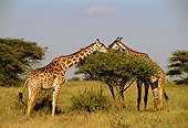 AFW 09 TL0012 01