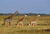 AFW 09 TL0013 01